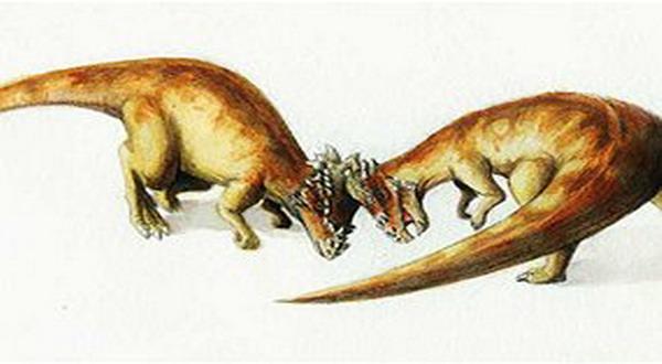Dinosaurus Unik Ini Berkepala Mirip Helm