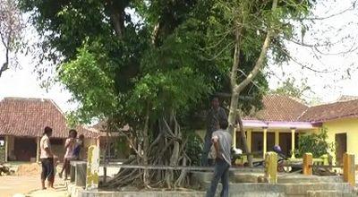 Pohon yang diduga rumah Sri Wahyuningsih (Foto: Widi N/okezone)