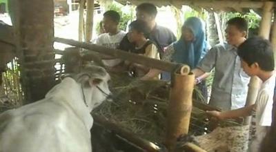 Hamzah dan keluarganya di peternakan sapi di desa bahasa (Dok: Puji H/Sindo TV)