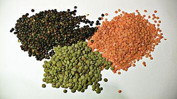 Hasil gambar untuk kacanglentil