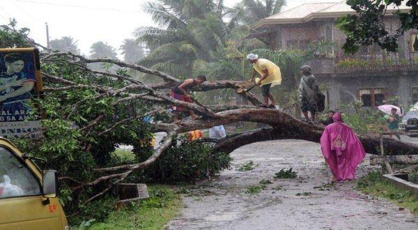 Pohon tumbang akibat hantaman Topan Bopha (Foto: AFP)