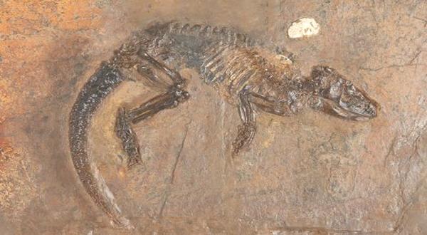 Peneliti Temukan Fosil Landak Purba