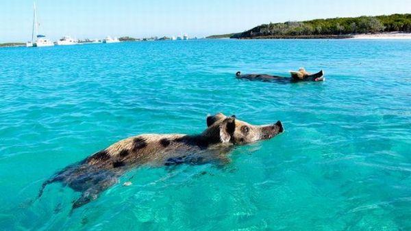 Wisata Ke Pantai Babi
