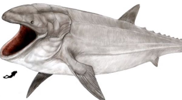 Ditemukan Fosil Ikan Paus Terbesar Di Dunia Okezone Techno