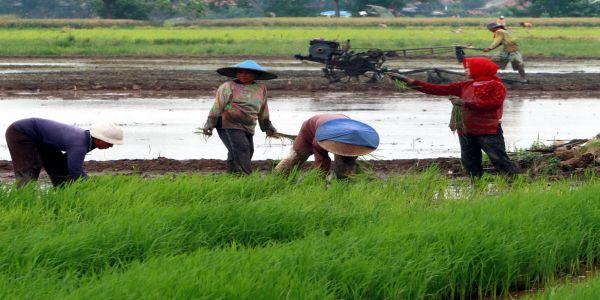 Sektor Pertanian Adalah Sektor Modern Okezone Economy