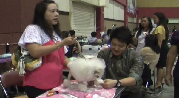 Rini saat mencukur bulu anjing pudel (Dok: Nur Syafei/Sindo TV)