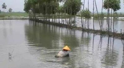 Tambak di Pekalongan direndam banjir (Suryono/Sindo TV)