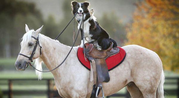 Shio anjing dan kuda