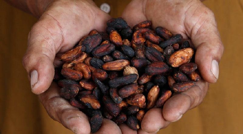 https: img.okezone.com content 2014 12 08 320 1076067 cargil-siap-bantu-tingkatkan-produktivitas-cokelat-ri-npddzAdBwx.jpg