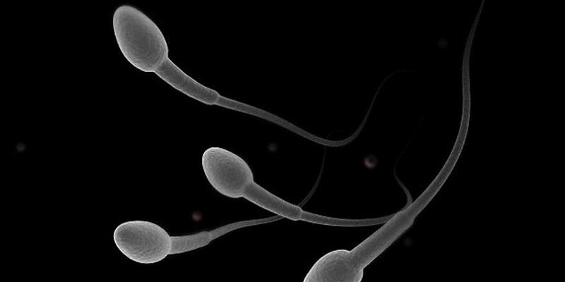 vo-vremya-prostudi-sperma