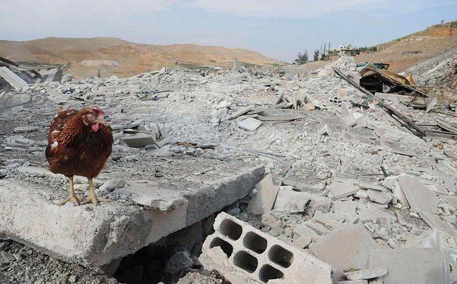 Ratusan ayam di Kulonprogo mati terserang ND