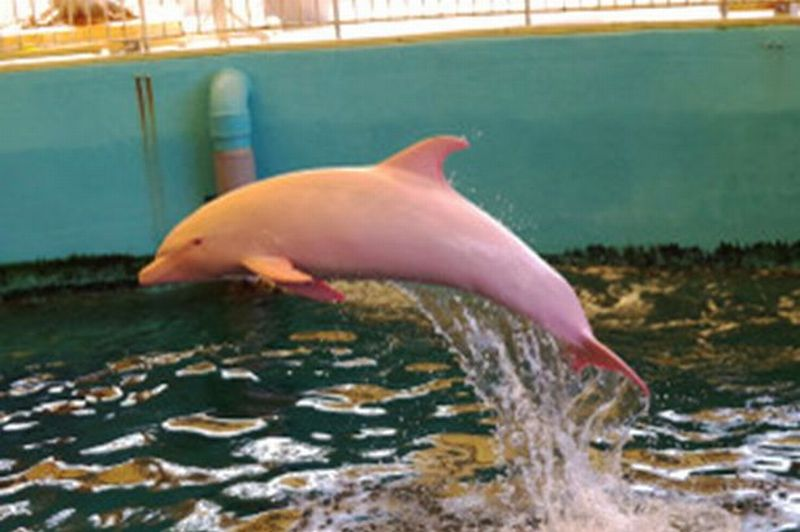 Lumba-Lumba Langka Ditemukan di Jepang