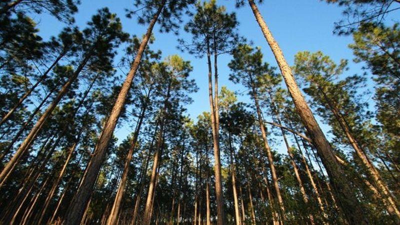 Apple Beli 36 Ribu Hektar Hutan untuk Produksi Ponsel