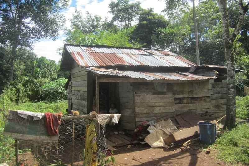 Lima Tahun Keluarga Miskin Ini Hanya Makan Daun-daunan
