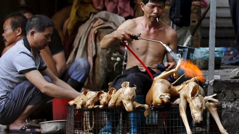 https: img.okezone.com content 2015 06 22 18 1169122 festival-daging-anjing-yulin-masih-terus-diadakan-vxccJVhgkC.jpg