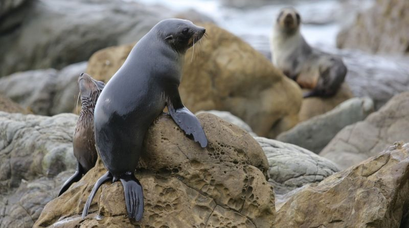 https: img.okezone.com content 2015 07 19 406 1183294 ribuan-anjing-laut-hidup-selandia-baru-Z03cmW8EIR.jpg