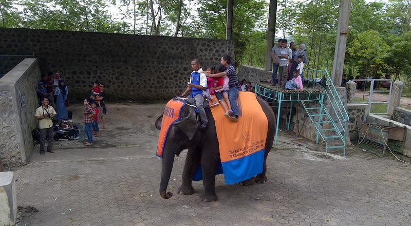 https: img.okezone.com content 2015 07 22 406 1183819 serunya-keliling-naik-gajah-way-kambas-di-pekalongan-8il2PRJFv2.jpg