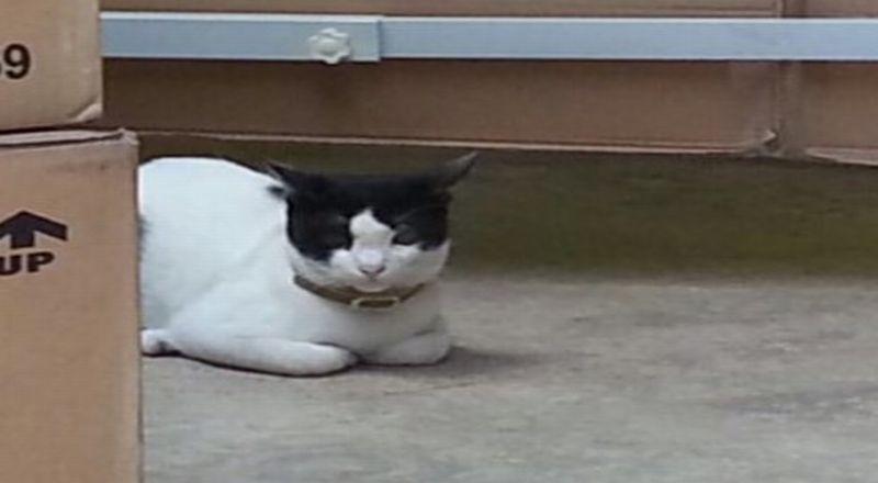 https: img.okezone.com content 2015 08 05 320 1191228 seekor-kucing-kesayangan-di-kantor-go-jek-BYmVmxLKSk.jpg