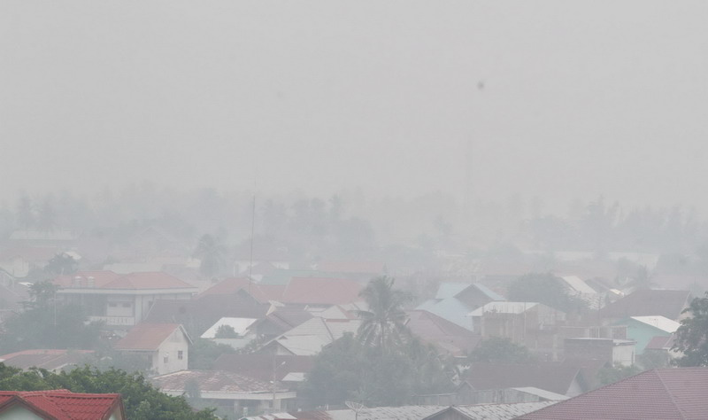Hal yang sama akan dilakukan Juru Kampanye Hutan Greenpeace Indonesia,