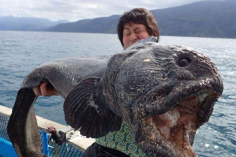 https: img.okezone.com content 2015 09 17 18 1216259 nelayan-fukushima-temukan-ikan-monster-berwajah-mengerikan-E1TaXidjX3.jpg