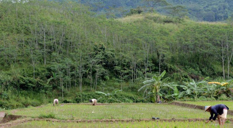 https: img.okezone.com content 2015 09 22 320 1218710 sektor-pertanian-mampu-serap-sepertiga-tenaga-kerja-ri-wjpw5BPGtb.jpg