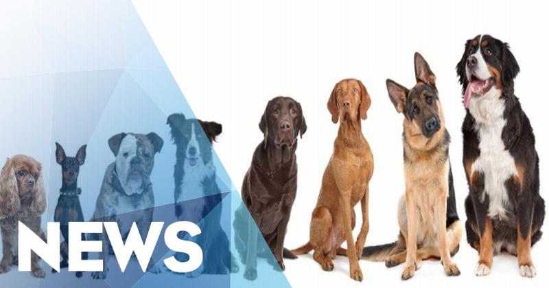 Resahkan Warga, Peternakan Anjing Digerebek Polisi Pamong Praja