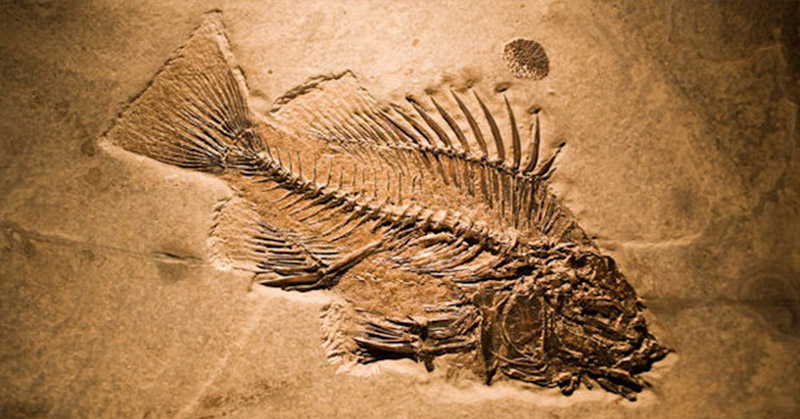 https: img.okezone.com content 2015 11 18 510 1251360 melihat-fosil-boiota-laut-purba-rgOhKogWWc.jpg