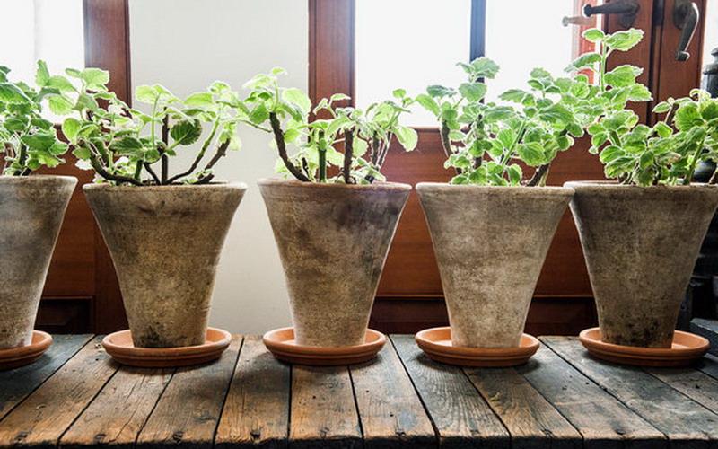https: img.okezone.com content 2015 11 25 481 1255293 apakah-menyimpan-tanaman-di-dalam-rumah-menyehatkan-2Ng6i8HLWt.jpg