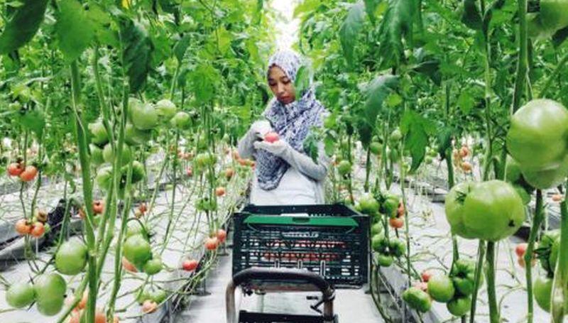 Cerita Mahasiswa Unpad Belajar Pertanian Di Jepang Okezone News
