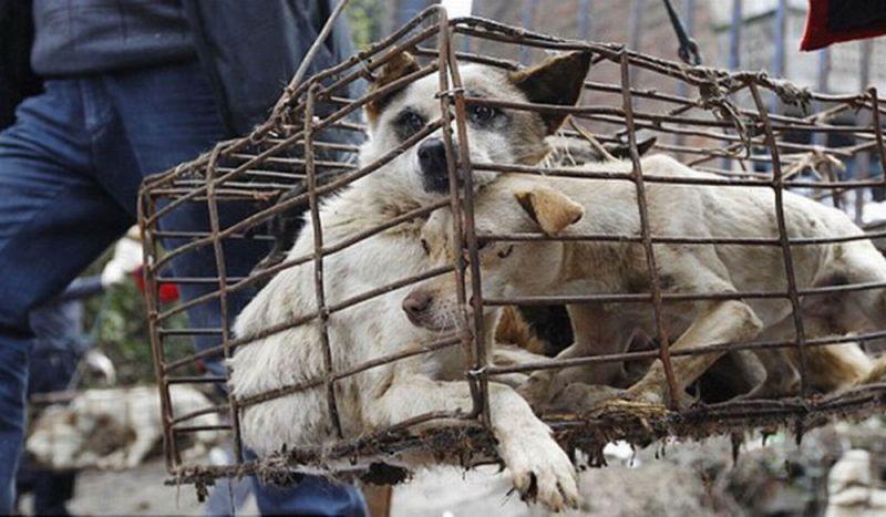 https: img.okezone.com content 2016 01 16 340 1289644 kabupaten-ini-canangkan-target-musnahkan-8-000-anjing-liar-6gnwanpnZS.jpg