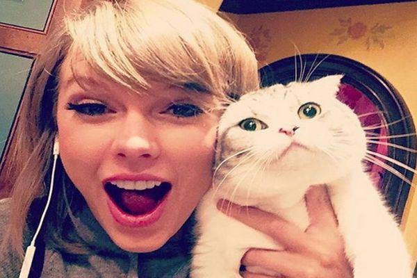 Download 94+  Gambar Kucing Lucu Berduaan Paling Keren Gratis