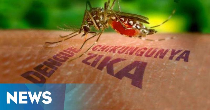 3.100 Ibu Hamil di Kolombia Terinfeksi Virus Zika