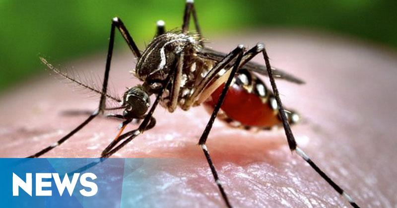 Nyamuk di Tangerang Diduga Sudah Kebal