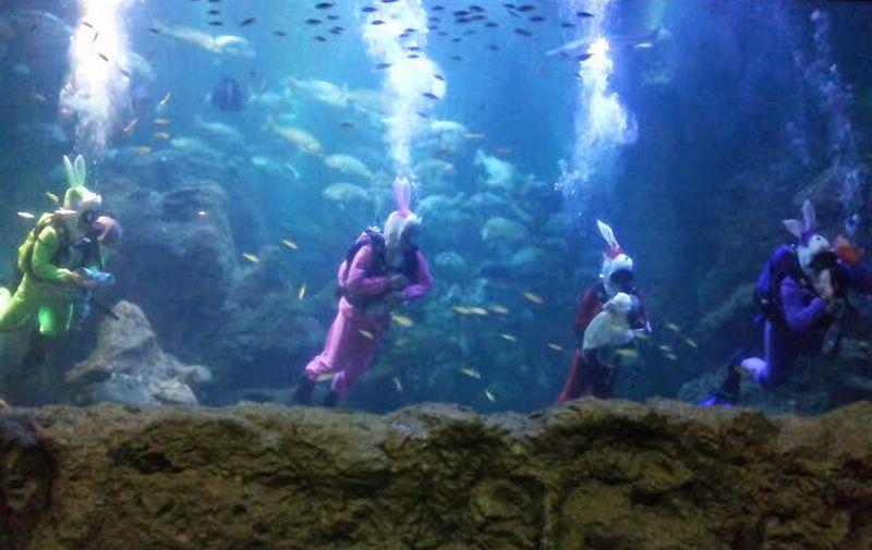 https: img.okezone.com content 2016 03 23 406 1343426 atraksi-baru-sea-world-indonesia-YAXsf5urVT.jpg