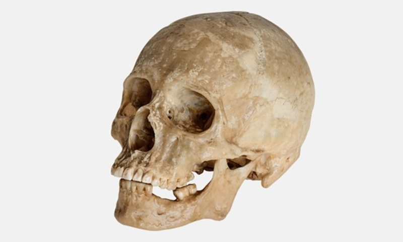https: img.okezone.com content 2016 04 19 340 1367313 warga-tulungagung-temukan-tengkorak-manusia-zaman-kuno-FrCryv8MrO.jpg