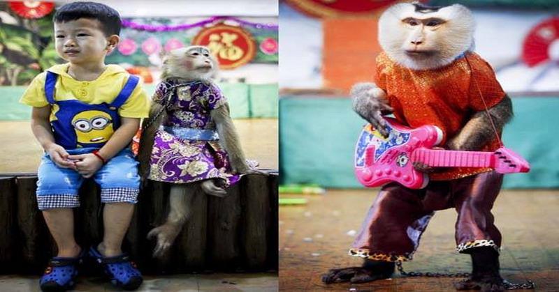 https: img.okezone.com content 2016 05 09 406 1383612 topeng-monyet-di-negara-ini-jadi-wisata-andalan-BE2pyoZ9qo.jpg