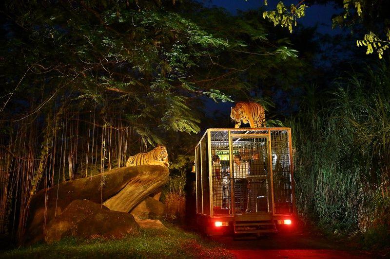 https: img.okezone.com content 2016 05 10 406 1384425 berani-menantang-nyali-di-safari-night-di-bali-b3tTuj46wU.jpg