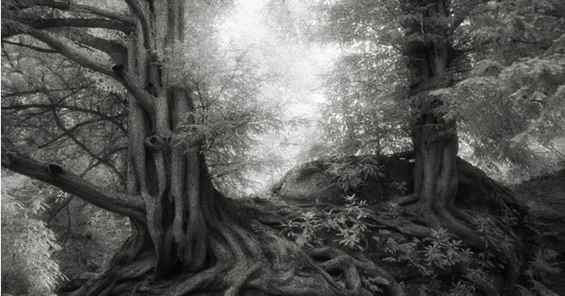 Tahukan Anda Pohon Ternyata Bisa Tidur?