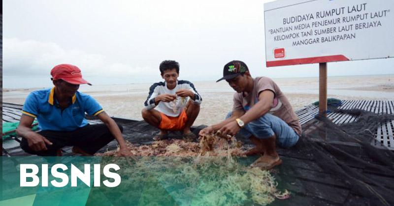 https: img.okezone.com content 2016 06 07 320 1408162 pengolahan-rumput-laut-jadi-prioritas-PS8OYQBXaE.jpg