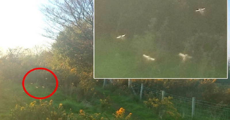 Makhluk Bersayap Diduga Peri Terekam Keberadaannya di Wales