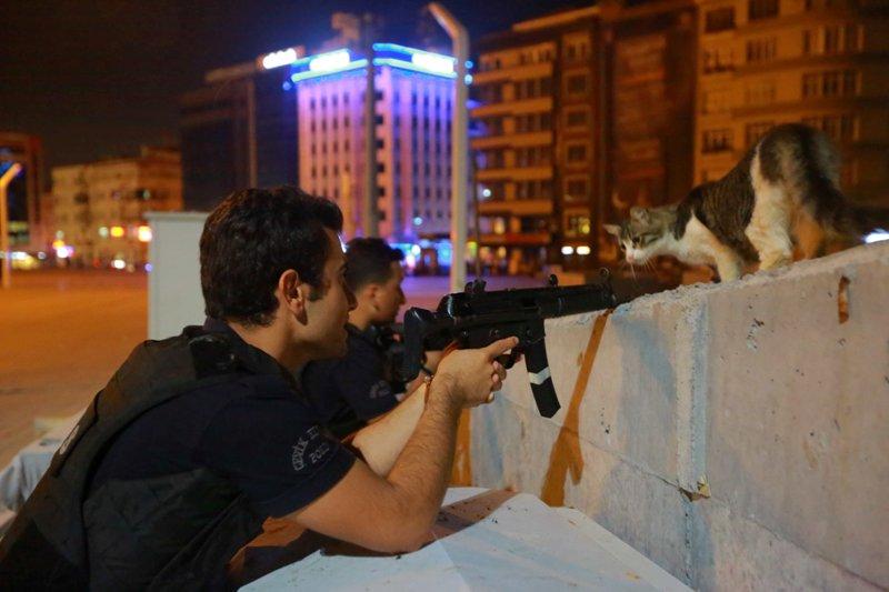 Aksi seekor kucing di tengah kudeta militer Turki jadi perbincangan (Foto: Kemal Aslan/Reuters)