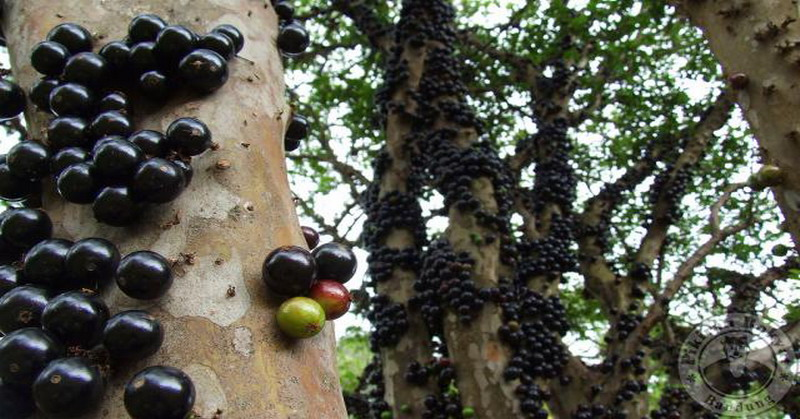 87+ Gambar Pohon Anggur Yg Baru Tumbuh Terbaik