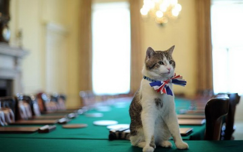 https: img.okezone.com content 2016 08 09 481 1458551 mitos-dan-fakta-hubungan-memelihara-kucing-dengan-kesehatan-UpQVAZIFgo.jpg