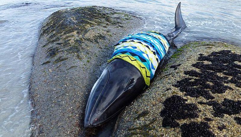 Unduh 510 Koleksi Gambar Ikan Paus Terbaru