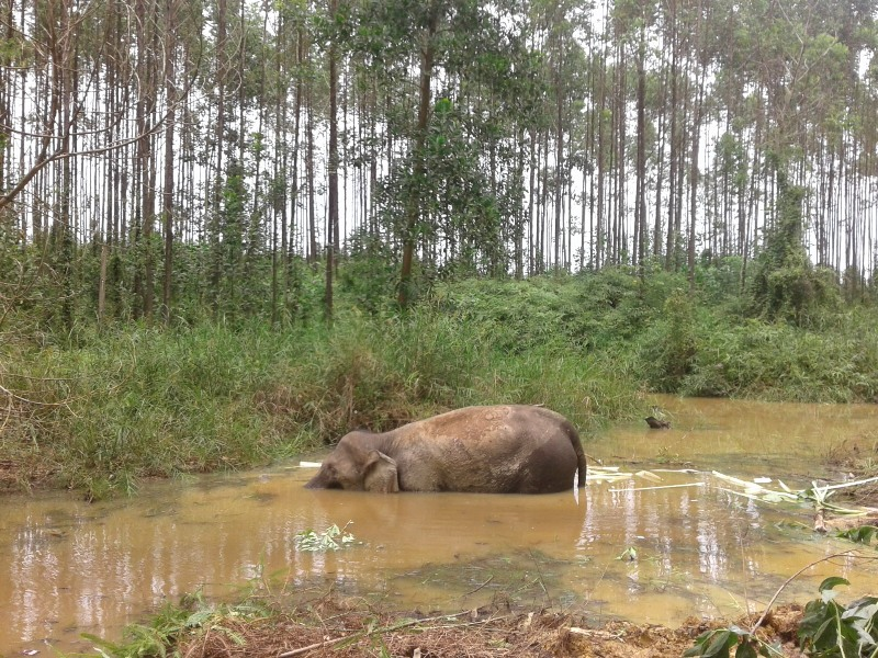 https: img.okezone.com content 2016 09 08 340 1484789 gajah-mati-di-kanal-perusahaan-hti-dipenuhi-luka-tombak-4oz8sJtOmG.jpg