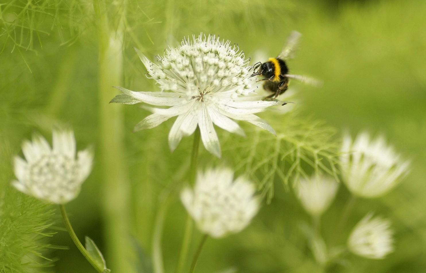 Miliki Otak Kecil, Lebah Justru Bisa Belajar dan Mengajar