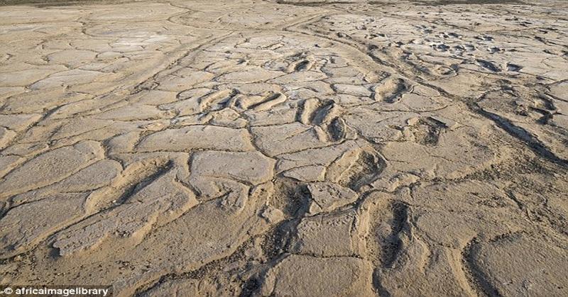 Kumpulan Jejak Kaki Berusia 19 Ribu Tahun Ditemukan