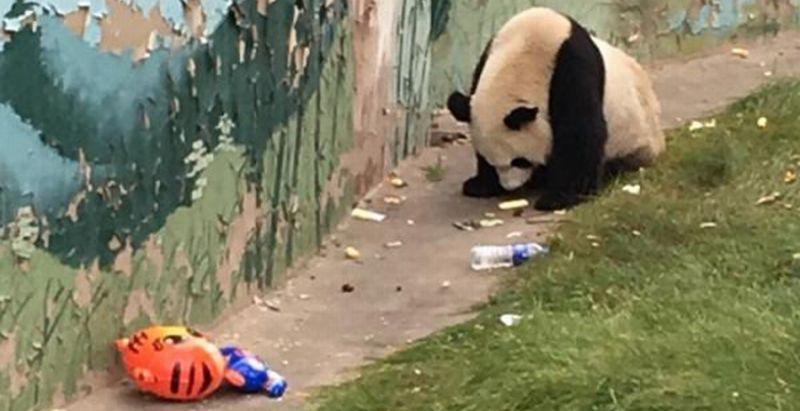 https: img.okezone.com content 2016 10 13 406 1513526 ya-ampun-ada-panda-makan-sampah-DNUaaBHxq0.jpg