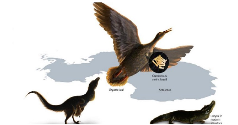 Temuan Fosil Organ Vokal Bantu Jelaskan Suara Dinosaurus