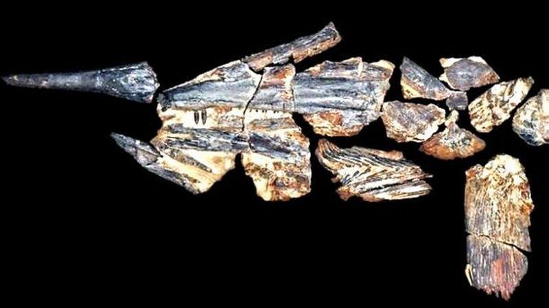 Fosil 'Ikan Pedang' Tertua Ditemukan di Australia